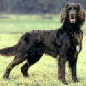 список с фото охотничьих собак