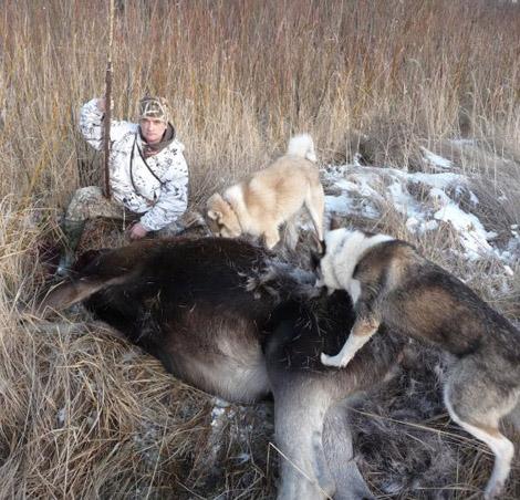 Охота на лося хоринский район