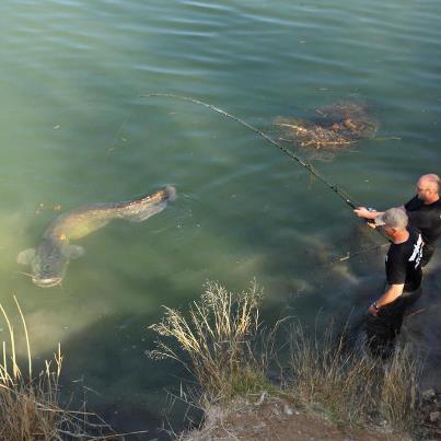 ловля сома в мае с берега