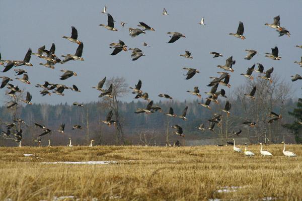 В Орловской области 10 дней будут охотится...