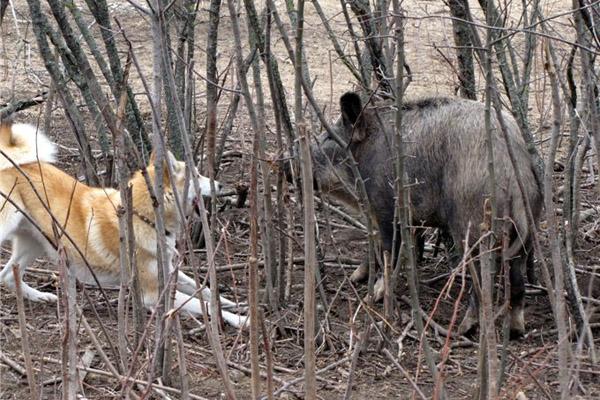 В Сумской области открылся сезон охоты