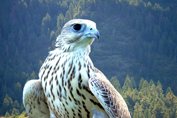 фото местных птиц