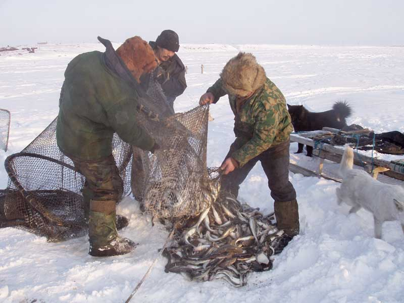 охота и рыбалка поморов видео