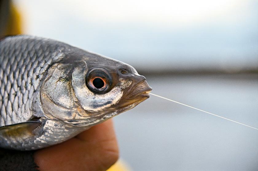 способы ловли рыбы весной