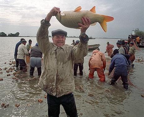 запрет на любительскую рыбную ловлю