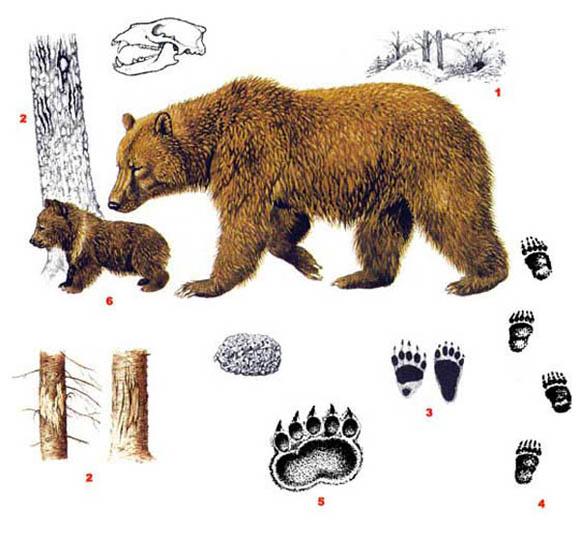 Охота на медведя рисунки