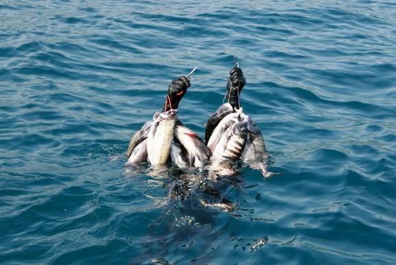 Подводная охота на Черном море, подводный арбалет, арбалет для подводной охоты, ружье для подводной охоты, подводная охота в Черном море осенью,тиковый арбалет для подводной охоты, подводная охота в Черном море весной, подводная охота на горыбля, подводная охота на зубаря, подводная охота на кефаль