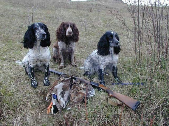 фото с собаками в новосибирске