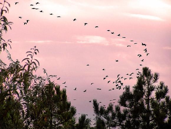 Перелет птиц весной картинки