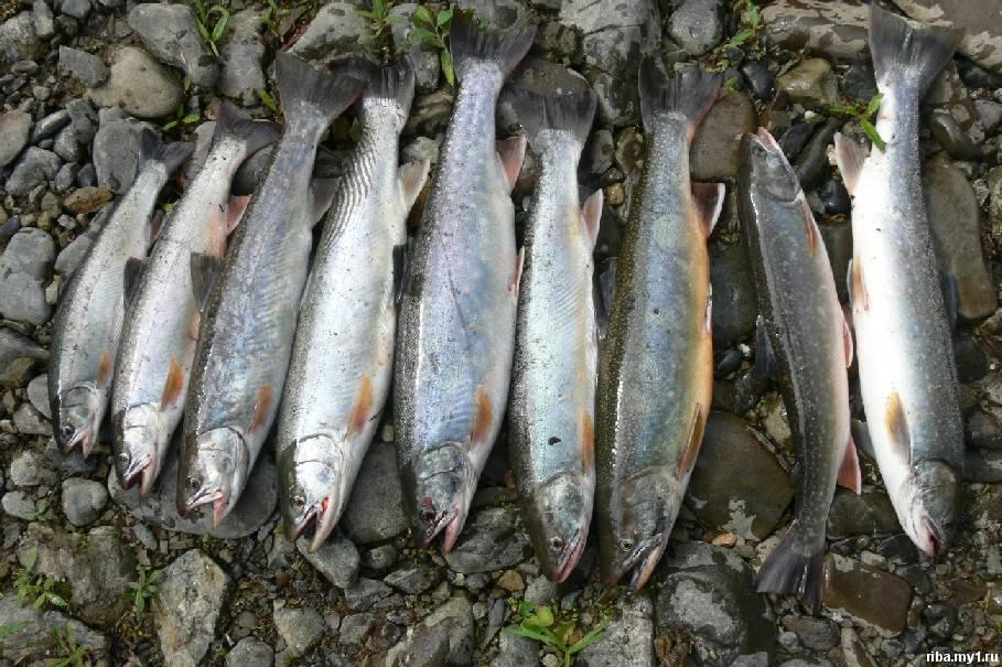 рыбалка в ильинском сахалинской области