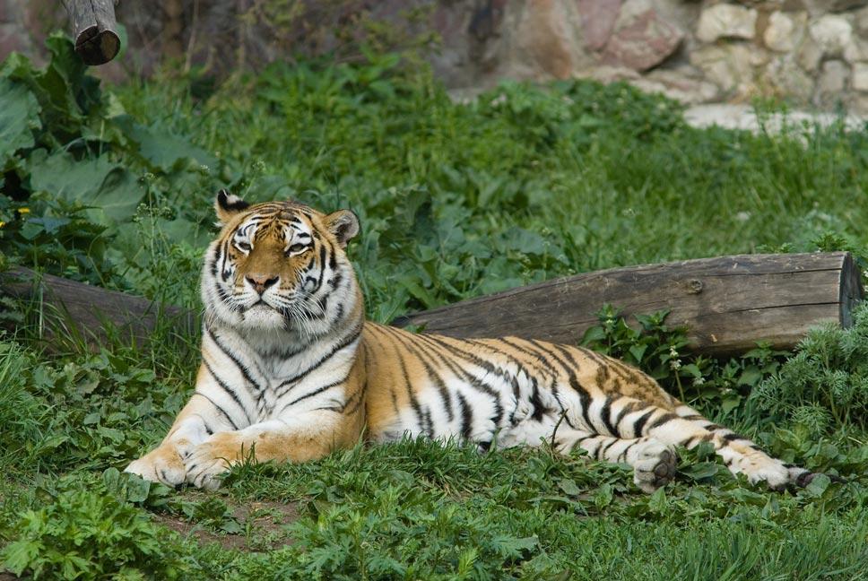 Стратегия сохранения редких животных и растений, Минприроды, браконьерство, охота, охота фото, охота видео, охота 2014, охота бесплатно, бесплатная охота, охота и рыбалка, сезон охоты, охота на гуся, охота в Подмосковье, Охота на Алтае, весенняя охота, осенняя охота, охота на уток, охота на кабана, открытие охоты, открытие охоты 2014, охотник, оружие, охотничьи ружья, охотхозяйство, охотничьи собаки, ружья иж, охота на лося, охота на медведя, охота на зайца