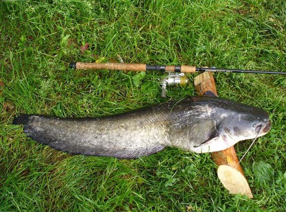 рыбалка прикормка для карася весной