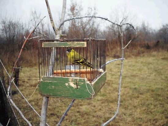 378Как сделать тайник для ловли птиц