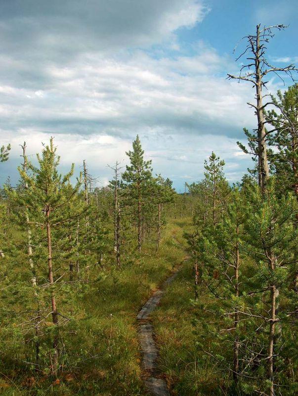 Биостанция Чистый лес