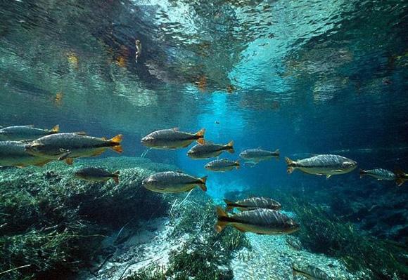 отбить мелкую рыбу прикормка базиликом