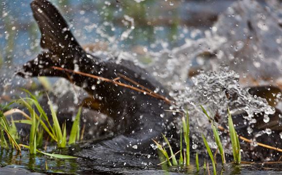 Рыбалка, нерестовый запрет 2013, запрет на рыбалку, весенний нерестовый запрет, нерестовый запрет астраханская область, нерестовый запрет на волге, период запрета на рыбалку