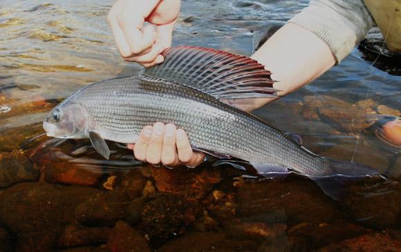 воркута где и на что ловить рыбу