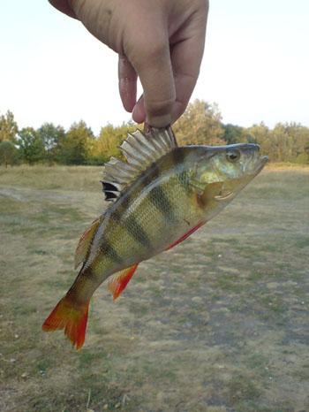 много лет тому назад я ловил рыбу