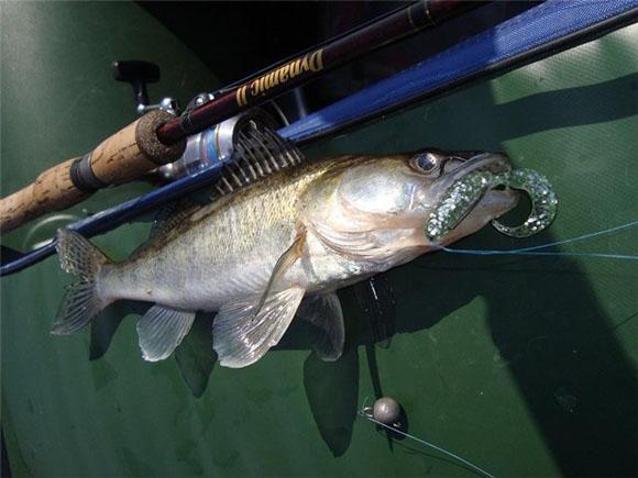 видео рыбалка на спиннинг на судака