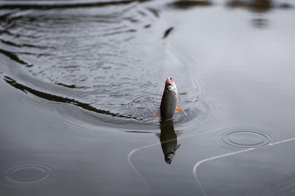 рыбалка в ростове дешево