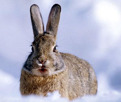 Картинки зайцы осенью в лесу