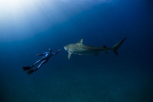 подводная охота на акул