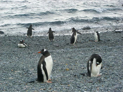 190 лет со дня открытия антарктиды картинки