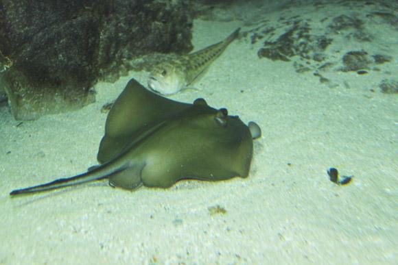 календарь подводного охотника и подводного фотографа