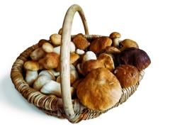 Блюда из кабачков баклажанов фарша