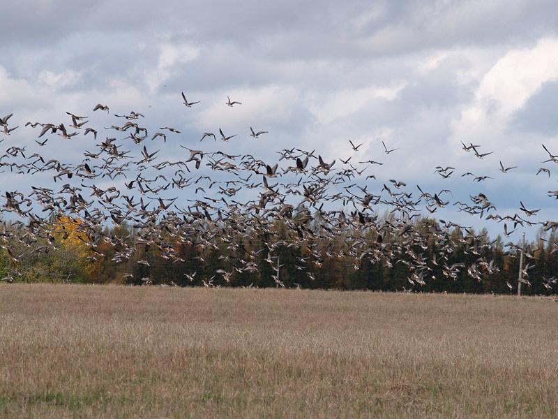 охотник выходит на поле.