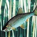 Календарь рыболова август 2017, календарь клева рыбы на август, календарь рыбака август, лунный календарь рыболова на август 2017, прогноз клева рыбы на август