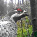 Календарь охотника на март, календарь охотника март , охота в марте, открытие охоты в марте, закрытие охоты в марте, на кого охотиться в марте, календарь охотника на март , охотничий календарь на март, весенняя охота , охота на утку в марте, охота на гуся в марте, календарь охоты, охота на утку весной