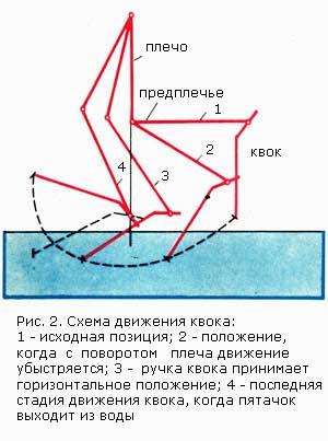 Рис.2 Схема движения квока в