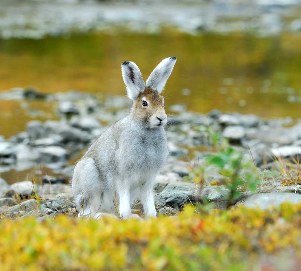 Скачать книгу про охоту на зайца