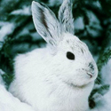 Календарь охотника на февраль, календарь охотника февраль , охота в феврале, открытие охоты в феврале, закрытие охоты в феврале, охота на кабана в феврале, на кого охотиться в феврале, календарь охотника на февраль , охотничий календарь на февраль, охота на пушных в феврале