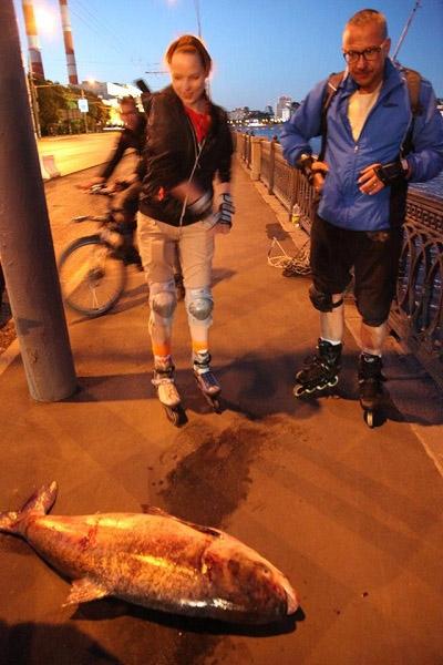 Рыбалка, Москва, рыбалка в Москве, бесплатная рыбалка в Москве, рыбалка в Москва-реке, мутанты Москва-реки, рыбалка в реке Москва