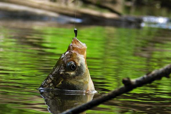 как сохранить рыбу живой на рыбалке летом