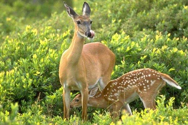 Охота, охота в Воронежской области, охота на копытных в воронежской области, охота на косулю, охота на кабана