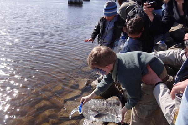 Рыбалка, праздник корюшки, день корюшка, праздник корюшки в Петербурге, праздник корюшки в Санкт-Петербурге 2013, рыбалка