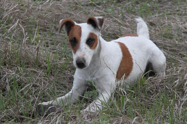 Догхантеры, собаки, жестокое обращение с животными, наказание за жестокое обращение с животными, охота на собак, дог хантеры, хантеры, сайты догхантеров, закон о защите животных, убийства собак