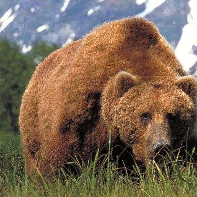 охота, охота на Камчатке, охота на медведя, охота на лося, сезон охоты 2013 - 2014 на Камчатке, охота на Камчатке 2013, охота на дикого северного оленя, охота на Камчатке на соболя, охота на Камчатке на рысь
