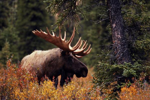 Охота, охотничье хозяйство, стратегия развития охотничьего хозяйства, охота и рыбалка, охота 2014, открытие охоты, общественные охотничьи угодья, лучшая охота, охота в России,  сезон охоты, охота на гуся