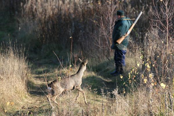 охота, охота в Омской области, охота на косулю, охота в Омской области на косулю, сроки охоты в Омской области, охота на медведя, охота на лося в Омской области, охота на косулю в Омской области