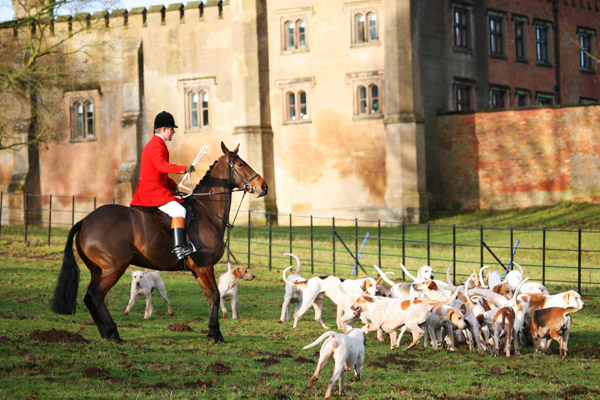 охота, охота в Великобритании, охота на лису, охота на лис, охота на лис с собаками, охота на лис с гончими, охота на лисицу, псовая охота на лис