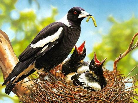 Фотоподборка детенышей зверей и птиц
