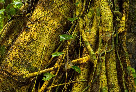 Прячущаяся в корнях дерева рептилия (наверху слева)