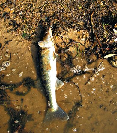 рыбалка, судак