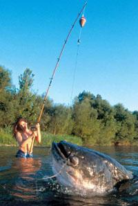 Как поймать сома, ловля сома, рыбалка на сома, техника ловли сома, тактика ловли сома летом, ловля сома на кружки, ловля сома спиннингом, ловля сома в отвес, ловля сома переметом, прикормка для сома, наживки для сома, как поймать сома на перловицу, как поймать сома на рака, как поймать сома на лягушку