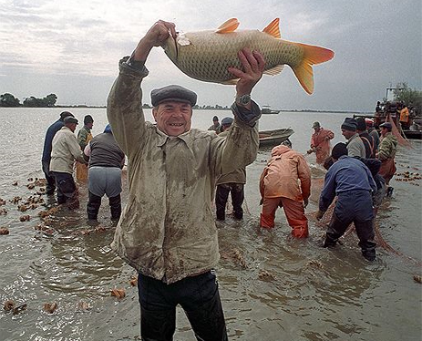правила рыболовства волжко-каспийского бассейна