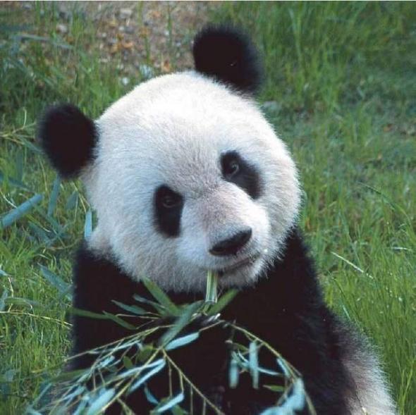 10 бесценных видов животных, находящихся на грани вымирания